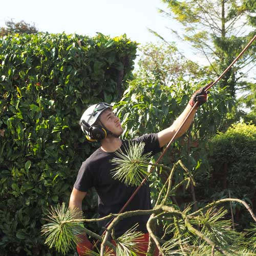 Contact Youngs Tree Services