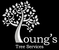 Youngs Tree Services Oxfordshire
